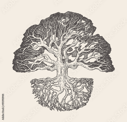 stary-debowy-drzewo-korzenia-system-rysujaca-wektorowa-ilustracja
