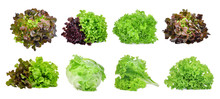 Set Of Lettuce Vegetable Isola...