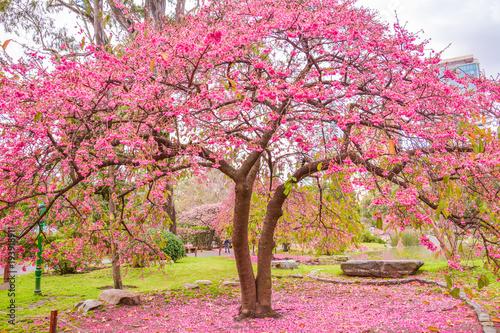 Fotografia, Obraz  Azale a Tree at Japanese Garden of Buenos Aires, Argentina