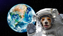 Pretty Dog Astronaut In Space ...