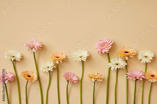 Composition from different gerberas on a yellow paper background.