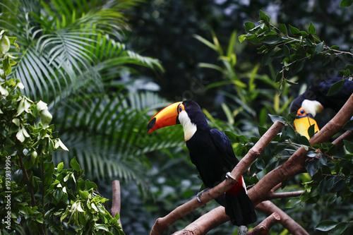 In de dag Toekan Toucan feeding in the zoo