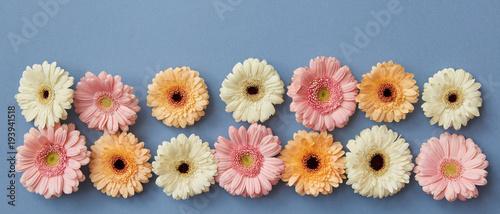 kwiat-panorama-od-gerberas-na-blekitnym-papierowym-tle
