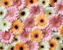 Floral Background From Differe...