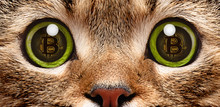 Portrait Of A Cat Closeup, In Whose Eyes A Symbol Of Bitcoin, Electronic Crypto Currency