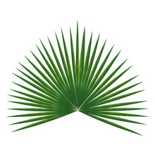Tropical Leaf Palm Icon Vector...