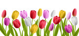 Fototapeta Tulipany - Colorful realisic tulip flowers with leaves. Vector illustration, isolated on white for horizontal spring banner and nature design
