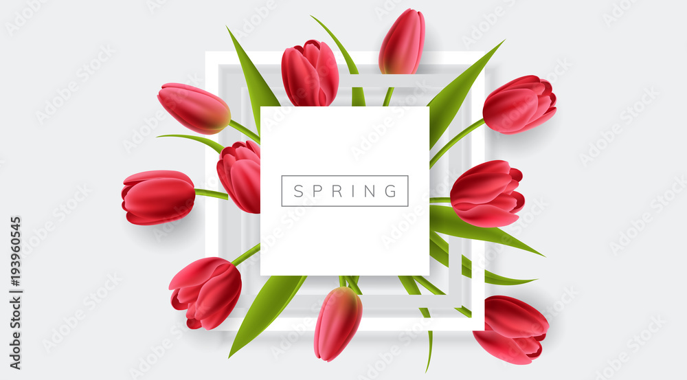Fototapety, obrazy: White frame with red tulip flower and green leaf. Realistic vector illustration for spring and nature design, banner with square frame