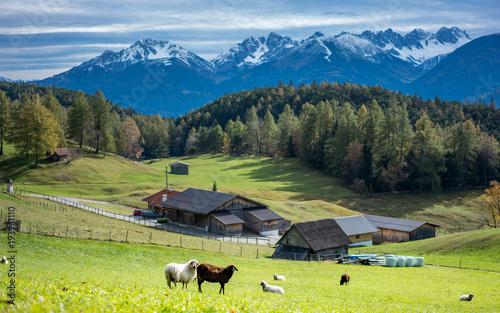 Plakat Owce i górski krajobraz