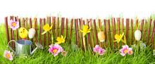 Ostern, Banner, Hintergrund -- Blumenwiese Mit Holzzaun, Küken, Blumen Und Gießkanne
