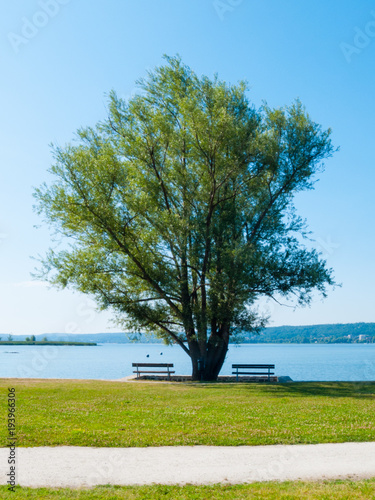 big willow tree by the lake with two benches Tapéta, Fotótapéta