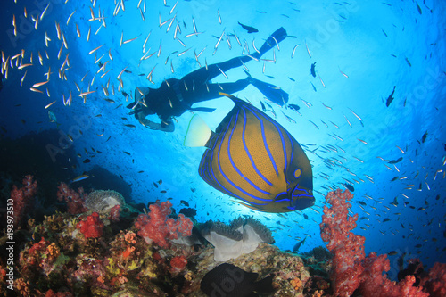 Papiers peints Recifs coralliens Scuba dive coral reef and fish