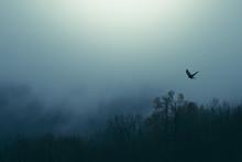 Bird Flying Over Misty Forest,...