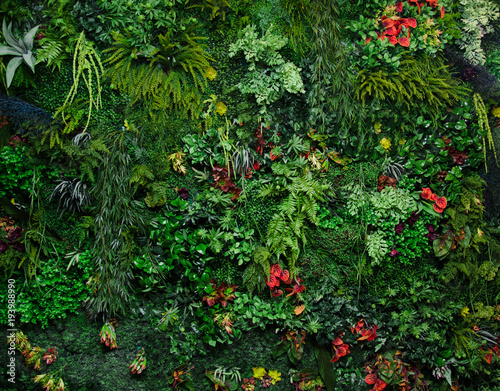 Cadres-photo bureau Vegetal wall with greenery
