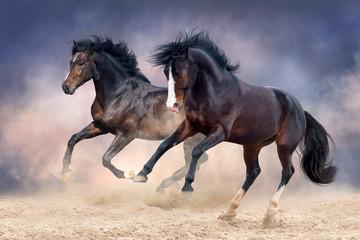 Horses run free in desert