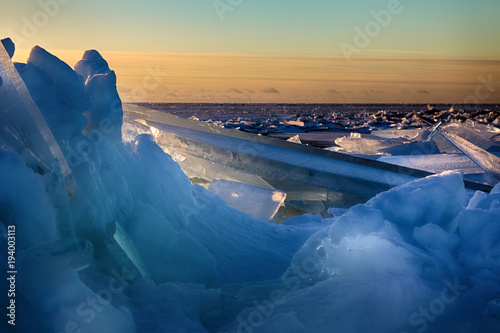 Fotografie, Obraz  Young Toros in Baltic sea