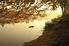 Tranquil View Of Lake By Trees...