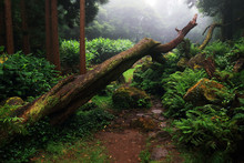 Tropical Forest On Flores Island, Azores, Portugal, Europe