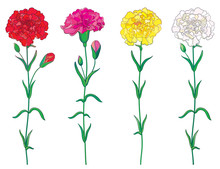 Vector Set With Outline Red, Pink, Pastel White And Yellow Carnation Or Clove Flower, Bud And Leaf Isolated On White Background. Ornate Carnation For Greeting Spring Or Summer Design In Contour Style.
