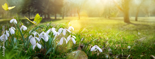 Poster Fleuriste Easter spring flower background; fresh flower and yellow butterfly on green grass background