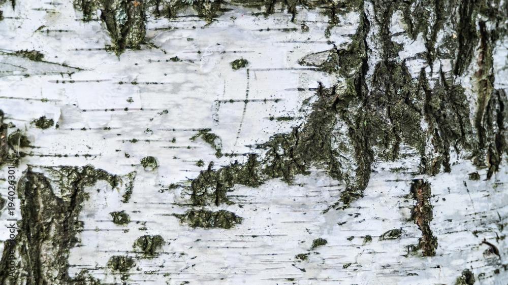 Texture,background, birch, closeup