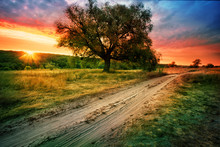 Sandy Road Next To Tree Under Setting Orange Sky