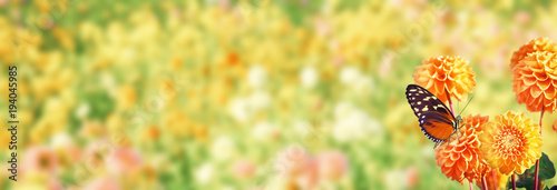 Stickers pour porte Jaune de seuffre Wunderschöner Schmetterling