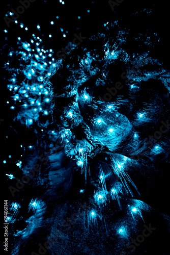 Closeup of New Zealand Glow Worms in Waipu Cave Canvas Print