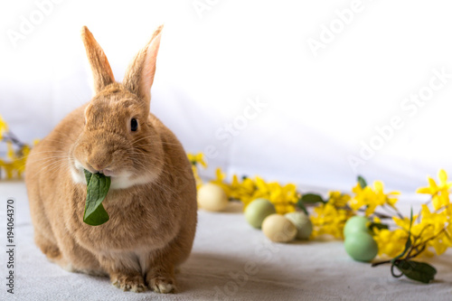 Fotografie, Obraz  Bunny rabbit munches on fresh spinach leaves surrounded by flowers for spring an
