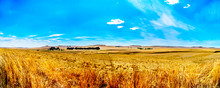Panorama Of The Wide Open Farmland And Distant Mountains Along The N3 Between Warden And Villiers In The Free State Province In South Africa