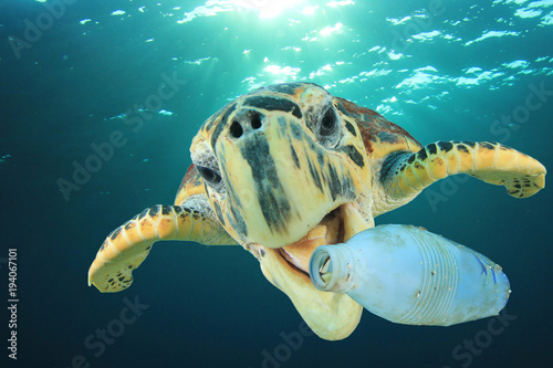 Foto op Aluminium Schildpad Plastic pollution problem - Sea Turtle eating plastic bottle in ocean