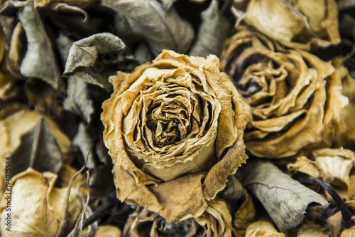 Valokuva  Background Dead Bouquet of roses wither dry.
