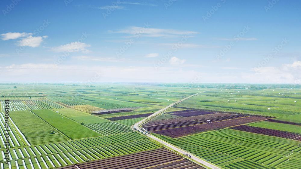 Fototapeta Beautiful scenery of red onion farmland