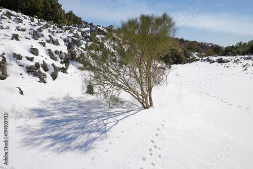Fényképezés  Broom Shrubs On Winter Etna Mount, Sicily