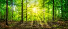 Grünes Waldpanorama Im Sonnenlicht