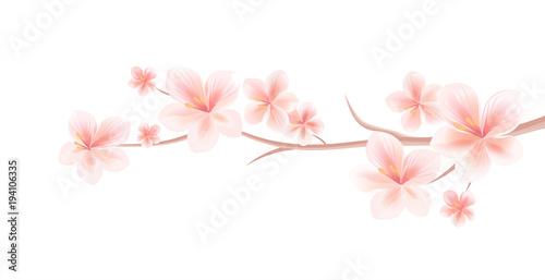 Branch of sakura with light pink flowers isolated on white branch of sakura with light pink flowers isolated on white background sakura flowers cherry mightylinksfo