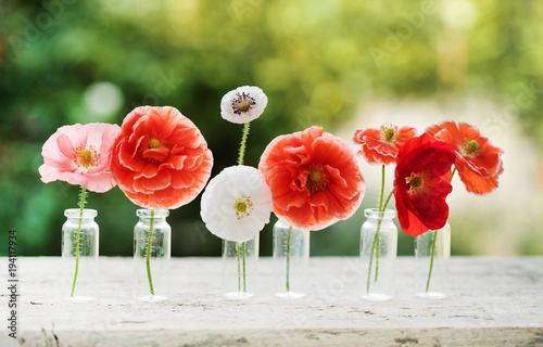 Poppy Flowers In Vases Buy This Stock Photo And Explore Similar