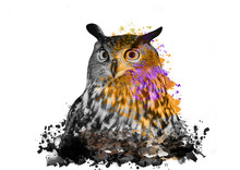 Owl With Abstract Paint On Whi...