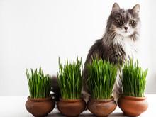 Sweet Kitten And Green Grass I...