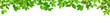 Grüne Blätter als Freisteller vor weißem Hintergrund