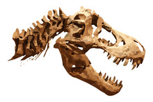 Vector Skeleton Of Tyrannosaurus Rex ( T-rex ) On Isolated Background . Skull And Neck