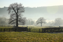 Field Containing Sheep On A Misty Winters Day In Wharfedale Yorkshire England UK