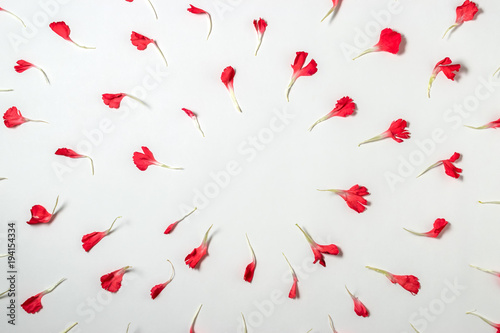 Foto op Aluminium Milkshake Red petals of carnation flower. Blooming concept. Flat lay.