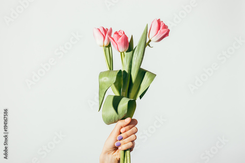 Fotografie, Obraz  Female hand holding a bouquet of pink tulips