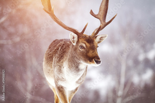 Foto op Plexiglas Hert Deer in wintertime
