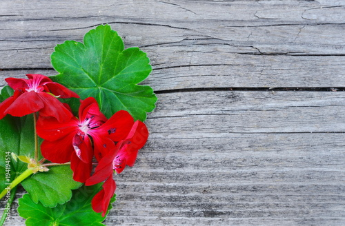 Photo Geranium Pelargonium Flowers and leaves on a wooden table with space for text