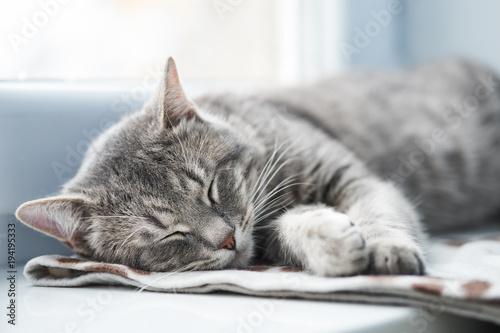 Keuken foto achterwand Kat Domestic Cat sleeping