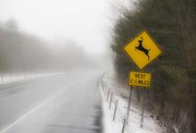 Deer Crossing Sign On Highway