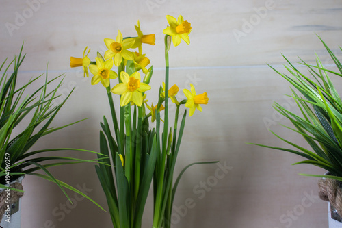 Deurstickers Narcis Yellow narcissus or daffodil flowers on light background