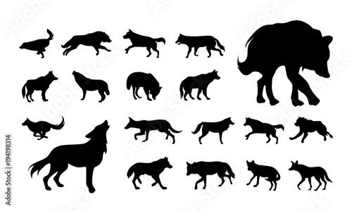 Naklejka premium zestaw różnych wektor wilk i lis sylwetka